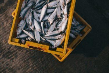韓国の対日水産品輸入は約6割減、福島原発事故以降で…韓国の対日輸出は横ばい
