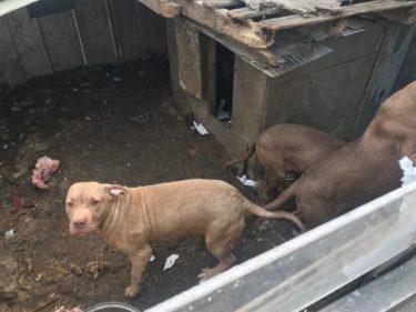 韓国で犬食意識に変化 8割が反対も、全国3,000カ所の犬農場で年間100万匹屠殺