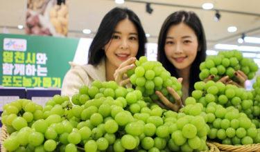 韓国紙「ベトナムは韓国産シャインマスカットが人気」「しかし中国産が15分の1価格で販売開始…」